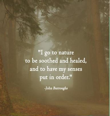 i-go-to-nature-to-be-soothed-and-healed-and-to-have-my-senses-put-in-order-quote-1